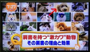 「めざましテレビ」社員犬チャオの紹介