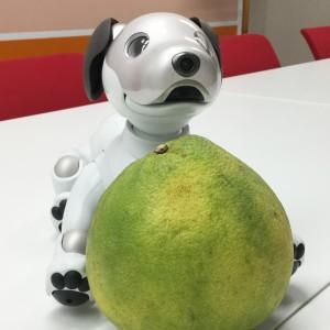 ユーシステムの社員犬 U-bo ユーボ